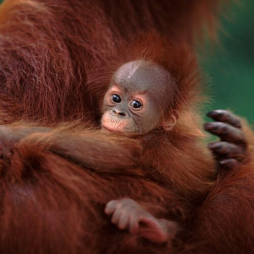 WWF, programas de conservación animal